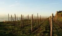 Napoli: al via il primo 'Festival delle vigne metropolitane'